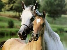 Schöne Pferde Bilder - mehr als 70 sch 246 ne pferde bilder archzine net