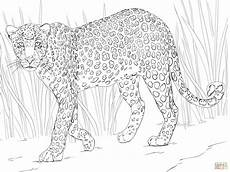 leopard coloring page free printable coloring pages