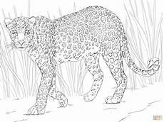 Ausmalbilder Leopard Ausdrucken Ausmalbild Afrikanischer Leopard Ausmalbilder Kostenlos