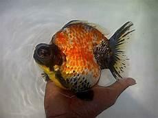 Gambar Organ Ikan Gambar Ikan Hd