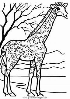 giraffen 35 gratis malvorlage in giraffen tiere ausmalen