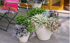 Edle Herbstromantik Auf Balkon Und Terrasse Bepflanzung