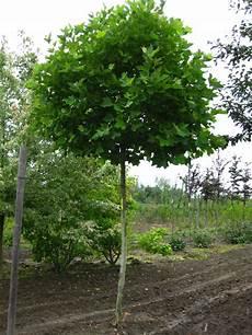 Baum Und Rosenschule Zumpe