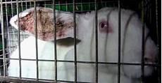 la gabbia la 7 ue ha votato per il benessere dei conigli d allevamento