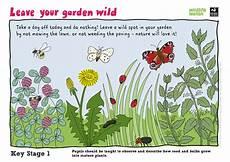 plants lesson ks1 13726 wildlife year 1
