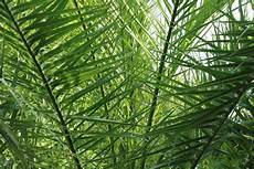 ungiftige zimmerpflanzen f 252 r katzen 44 pflanzen f 252 r ihre