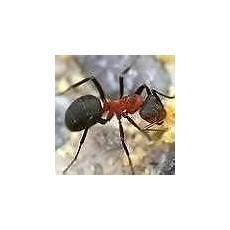 was hilft gegen ameisen in der wohnung was hilft gegen ameisen in der wohnung tipps und infos hier