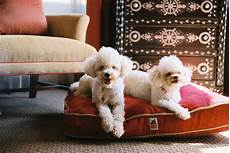 top 6 pet friendly hotels in the us