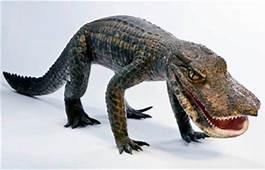Discoveries  Paul Sereno Paleontologist The