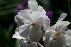 comment soigner une orchid 233 e comment entretenir une