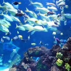 sea timmendorf sea timmendorfer strand aquariums timmendorfer
