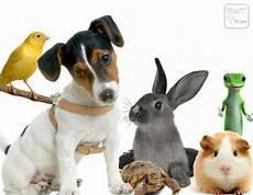 famille d accueil pour chien pendant les vacances faire garder chien ou chat pendant les vacances mes souvenirs ma famille mes amis