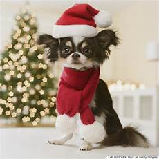 christmas gifts for pets tasty treats and purrfect presents for cats and dogs