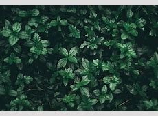 Plant Aesthetic Laptop Wallpapers   Top Free Plant