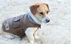 hunde wintermantel test die 10 besten winterm 228 ntel f 252 r hunde