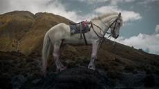 46 Gambar Kuda Putih Paling Bagus Kembang Pete