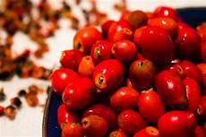 hagebutten marmelade vegan guerilla