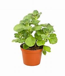 verpiss dich pflanze dehner