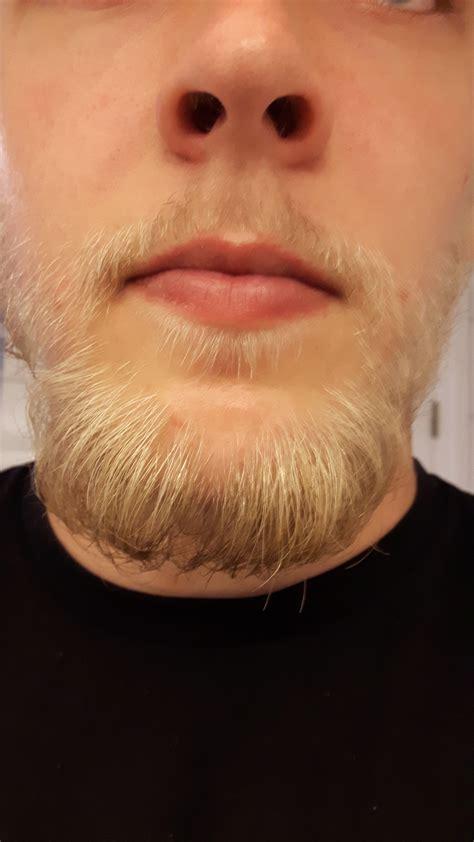 Blonde Beard Progress