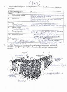 answer keys cell membrane worksheets ms ghtaura s class