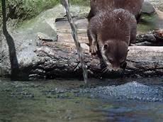 Gambar Air Hewan Margasatwa Kebun Binatang Binatang