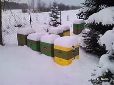 sterben bienen im winter wie 252 berleben bienen den winter