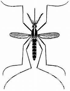 Fakta Menarik Tentang Nyamuk Berita Hari Ini