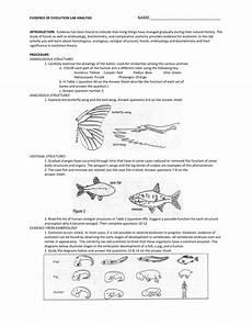 evidence of evolution worksheet answer key free printables worksheet