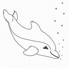 ausmalbilder erwachsene delfin