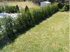 une haie d arbustes qui poussent vite esp 232 ces 224