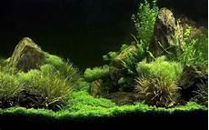 Printable Fish Tank Background