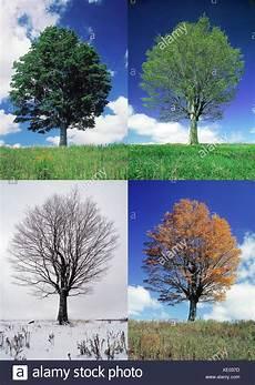 Ausmalbilder Herbst Und Winter Komponieren Ahorn Acer Spec Folge Jahreszeiten Sommer
