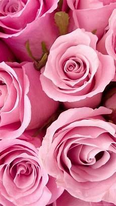 pink flower live wallpaper iphone pink roses wallpaper desktop background