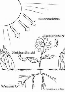 Malvorlagen Umwelt Gratis Malvorlage Photosynthese Malvorlagen Kostenlose