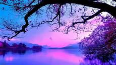 purple nature 4k wallpaper blue and purple sunset 2560 215 1440 wallpaper