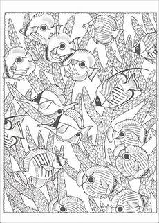 Ausmalbilder Erwachsene Fische Ausmalbilder F 252 R Erwachsene Fische Zum Ausdrucken