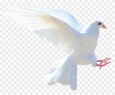White Dove Png Gambar Burung Merpati Putih Clipart