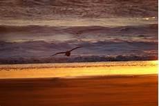 Seagull Apartments Ks by Shores Wa Sea Gull At Sunset Shores Wa