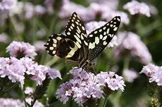 Schmetterling Auf Blume Foto Bild Tiere Wildlife