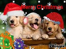 merry christmas with puppys picture 127234978