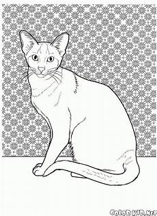 Ausmalbilder Siamkatze Coloring Page Cat