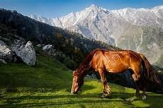 44 Gambar Kuda Cokelat Paling Bagus Kembang Pete