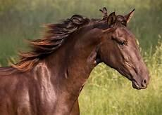 Ausmalbilder Pferde Norweger Norweger Pferde F 252 R Whatsapp Bilder Und Spr 252 Che F 252 R