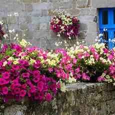 Balkonpflanzen H 228 Ngend F 252 R Eine 252 Ppige Bepflanzung Auf Dem