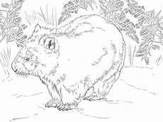 Malvorlagen Zum Ausdrucken Wombat Ausmalbilder Wombat Zum Ausdrucken Kostenlos F 252 R Kinder