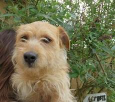Fox Terrier 3 Ans Spa De Thionville 57