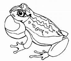 Frosch Malvorlagen Tiere Gemusterter Frosch Ausmalbild Malvorlage Tiere