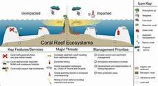 coral reef structure szukaj w