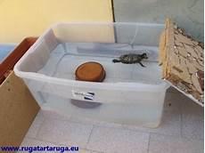vasche x tartarughe d acqua ruga tartaruga cosa mangia dove vive quanta acqua vuole
