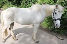 Ausmalbilder Bauernhof Mit Pferden Pony Reiten Auf Dem Bauernhof Fehmarn Ostsee Kinder Ferien